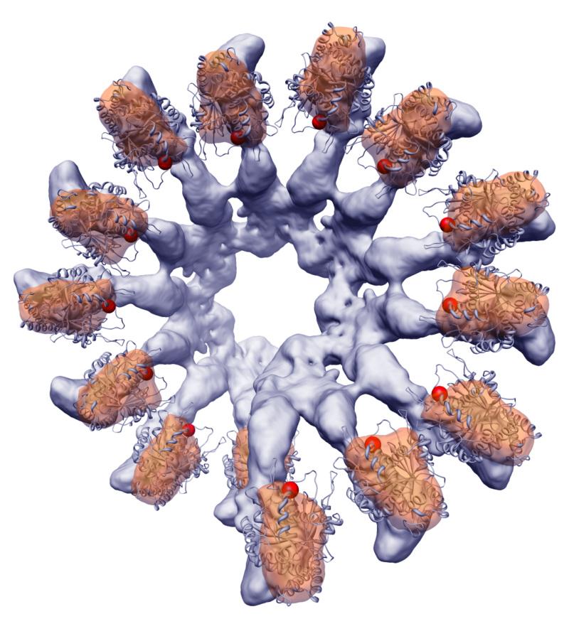 Molecular machines in biology Vogel_10