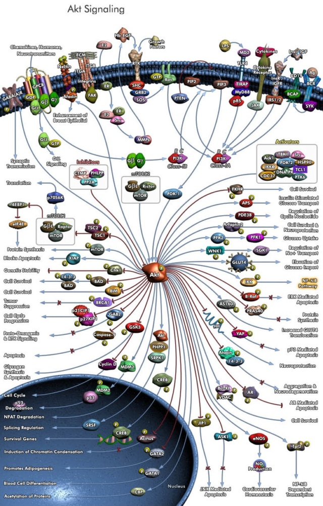 Evolution: Where Do Complex Organisms Come From? Worldv10