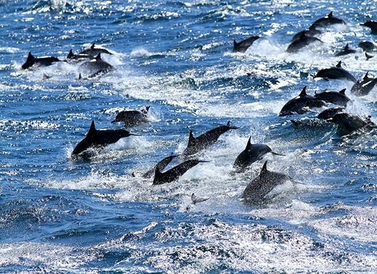 En Inde : les dauphins considérés comme « personne non humaine » Dauphi10