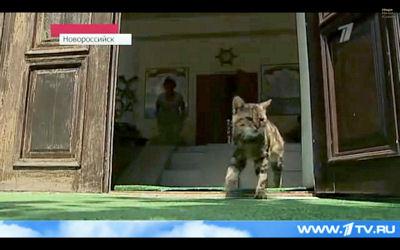 En Russie : le premier chat bibliothécaire  Kusiak10