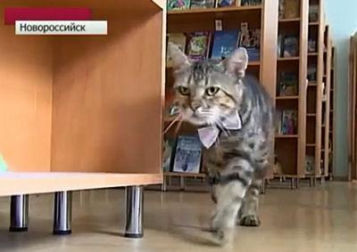 En Russie : le premier chat bibliothécaire  Kusiak12