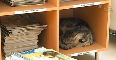 En Russie : le premier chat bibliothécaire  Kusiak13