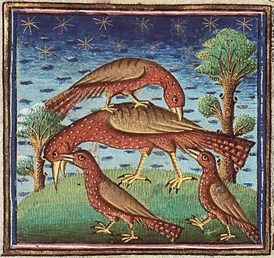 la langue des oiseaux  Oiseau10