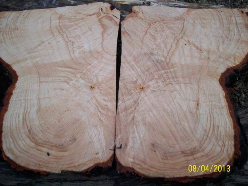 Drva za drške by GAGY Javor_11