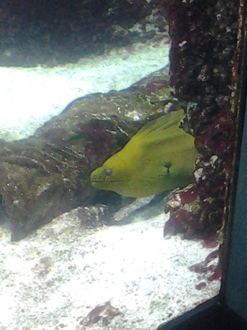 Aquarium de la Rochelle 20130813