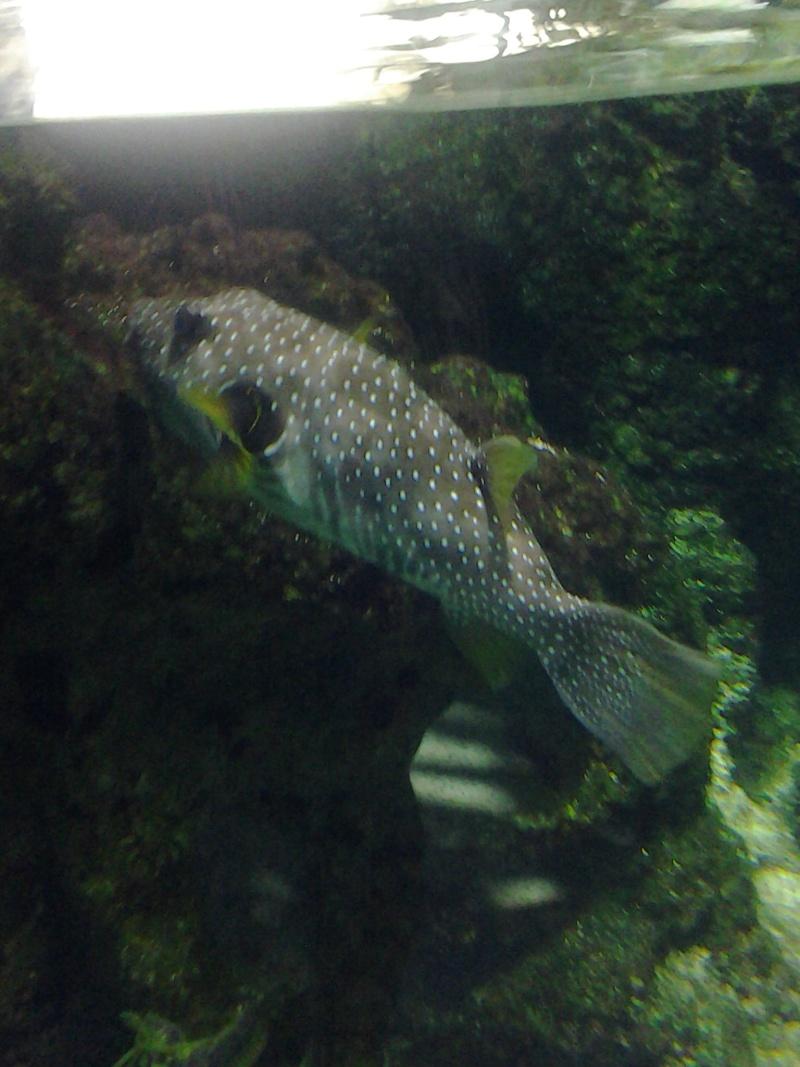 Aquarium de la Rochelle 20130814