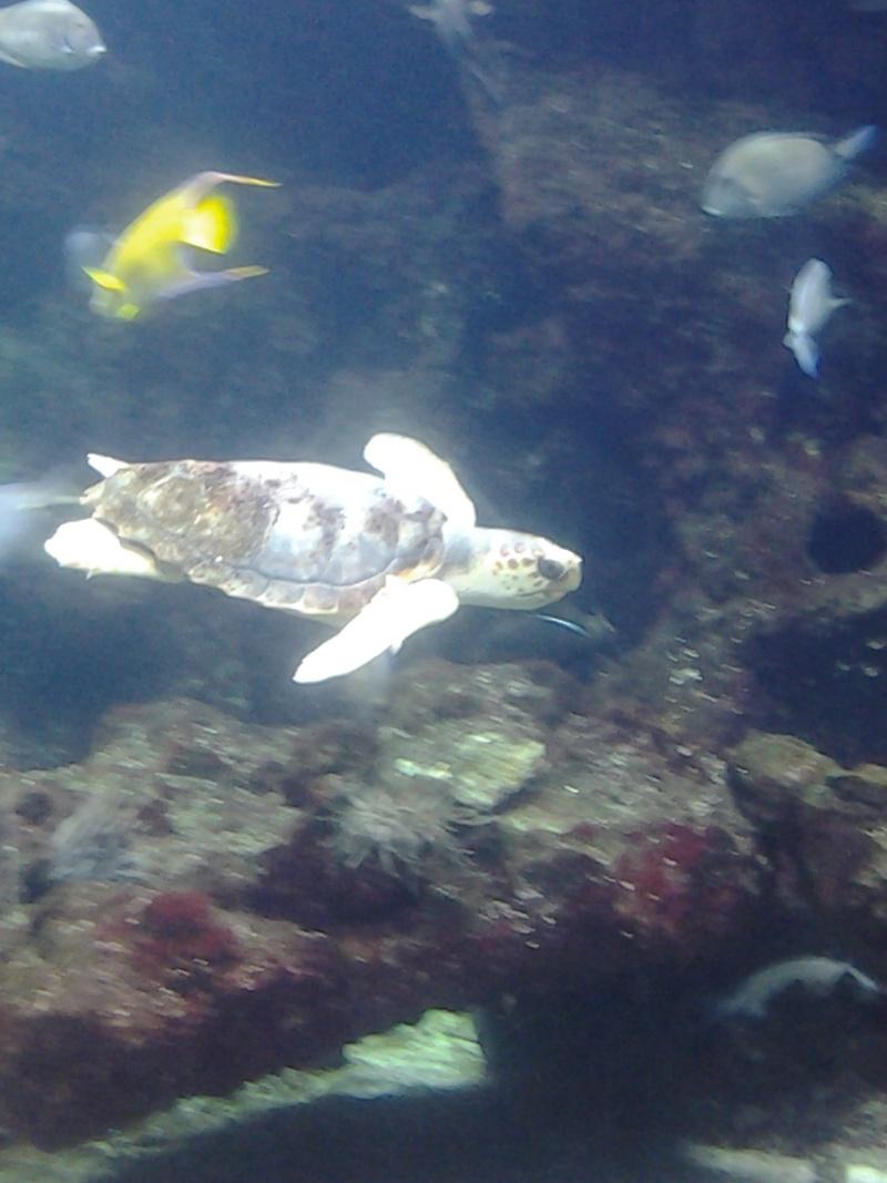 Aquarium de la Rochelle 20130818