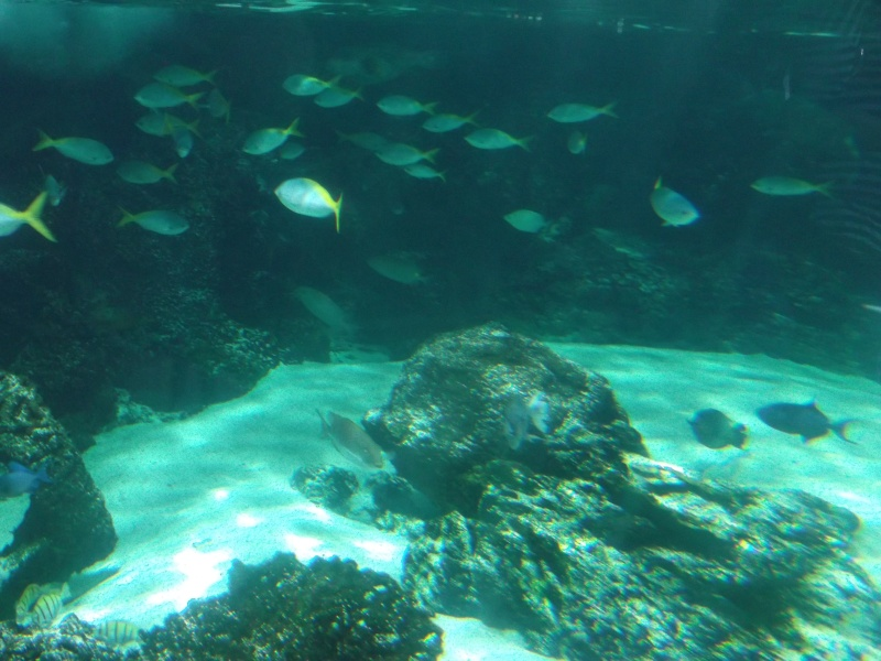 Aquarium de la Rochelle Dscf2011