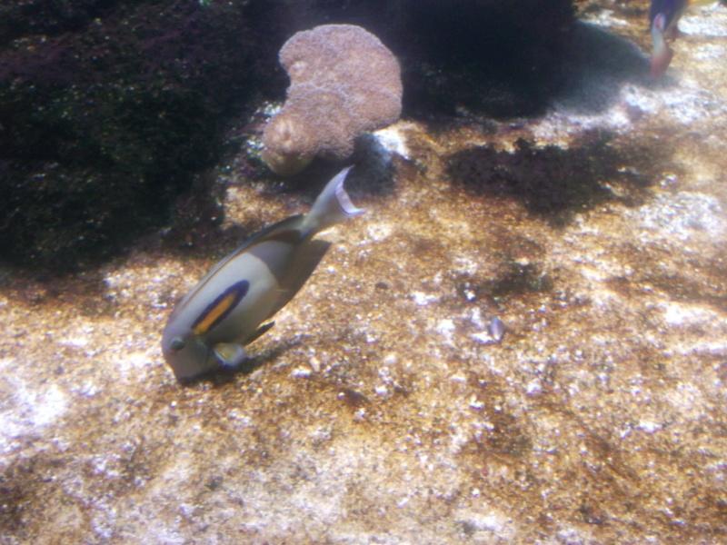 Aquarium de la Rochelle Dscf2013