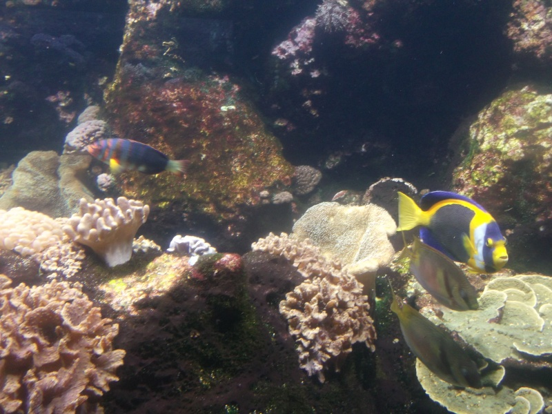 Aquarium de la Rochelle Dscf2014
