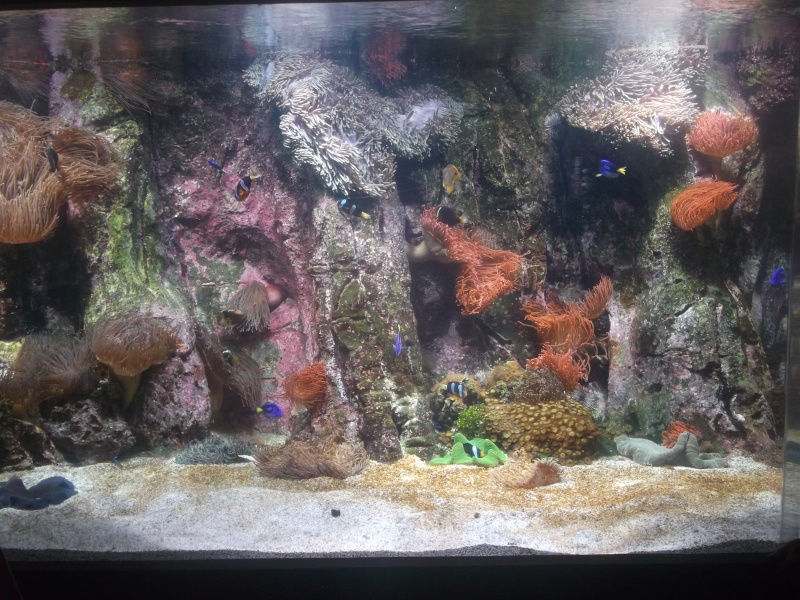 Aquarium de la Rochelle Dscf2015