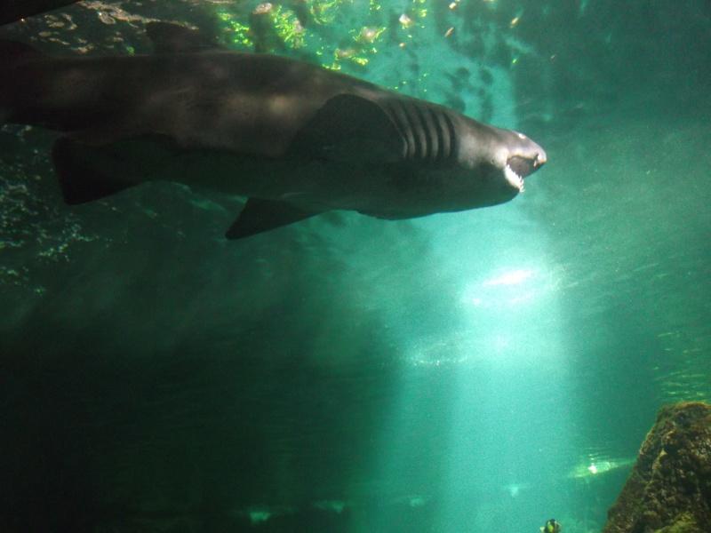 Aquarium de la Rochelle Dscf2017