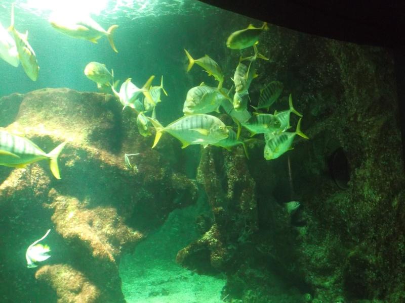 Aquarium de la Rochelle Dscf2018