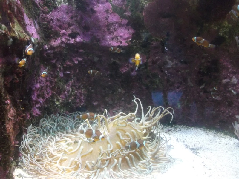Aquarium de la Rochelle Dscf2020