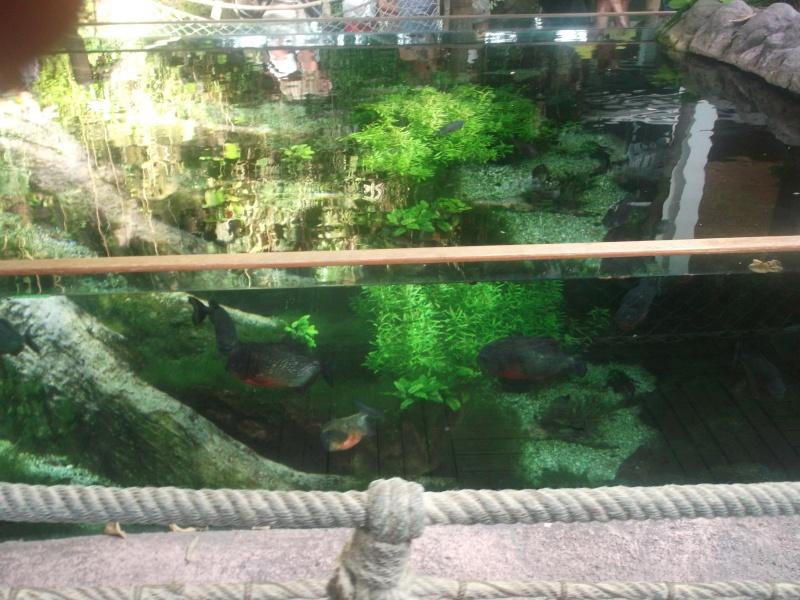 Aquarium de la Rochelle Dscf2023