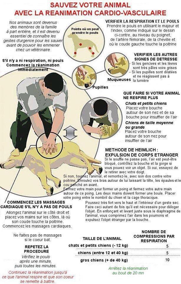 Sauvez votre animal avec la réanimation cardiovasculaire  32107810