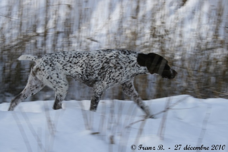 photos de chiens d'arrêt prises a l'arrêt sur gibier  Img_1011