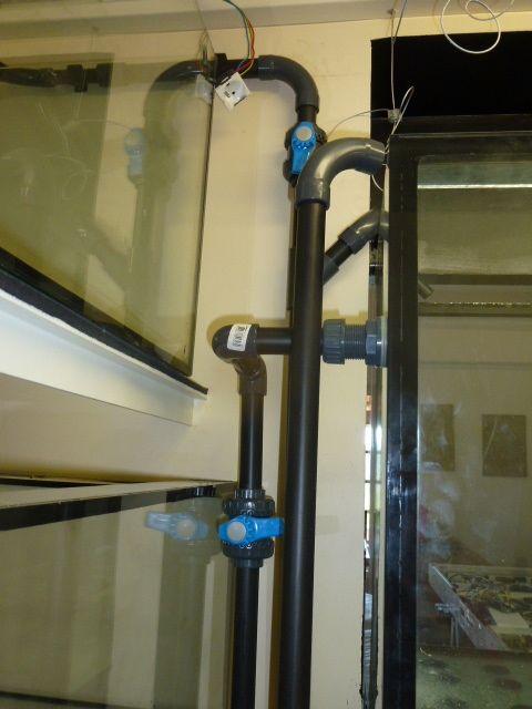 Aquarium recifal 1000L beber - Page 3 P1000513