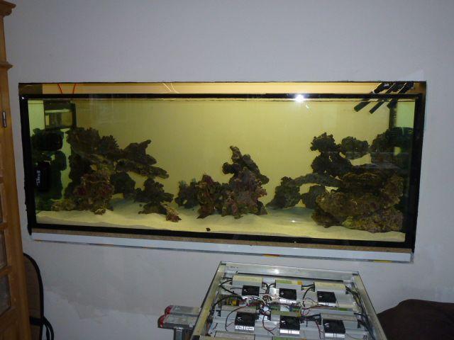 Aquarium recifal 1000L beber - Page 6 P1000652