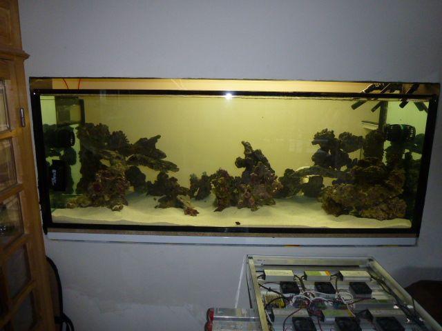 Aquarium recifal 1000L beber - Page 6 P1000653