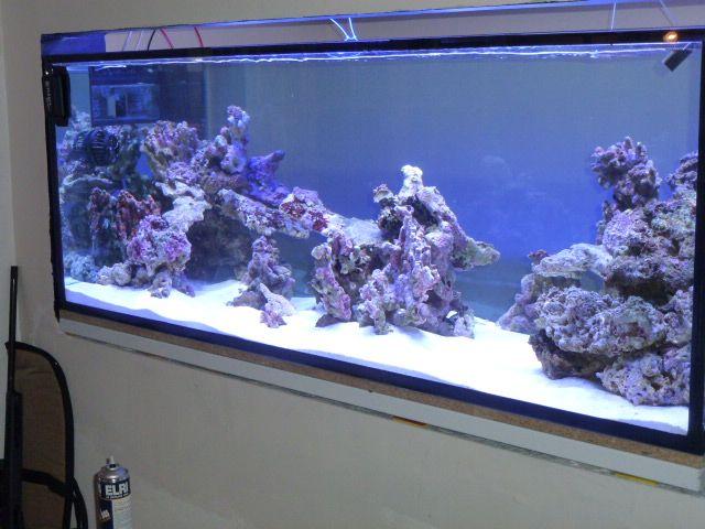 Aquarium recifal 1000L beber - Page 6 P1000657