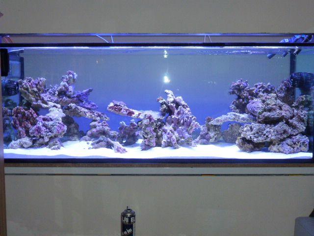 Aquarium recifal 1000L beber - Page 6 P1000658
