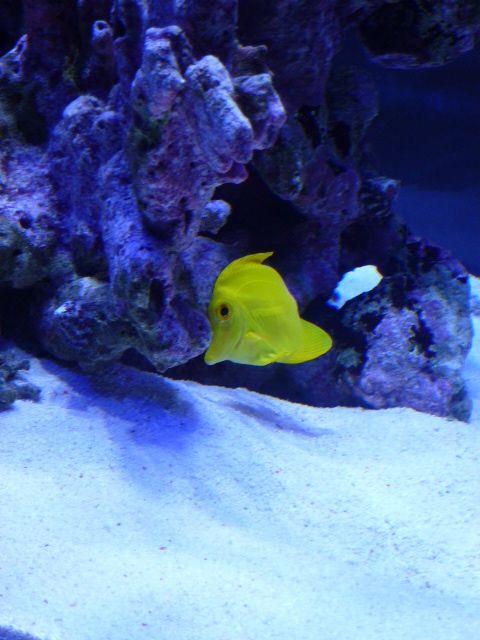 Aquarium recifal 1000L beber - Page 6 P1000659