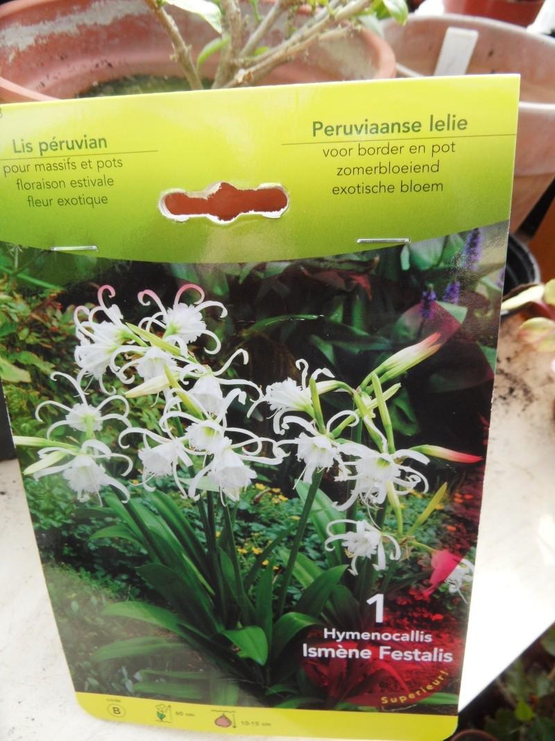 Plantation, culture et floraison des bulbes, des rhizomes, des griffes 00817