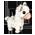 Alpaga Marron / Alpaga Blanc => Laine d'Alpaga Alpaca10