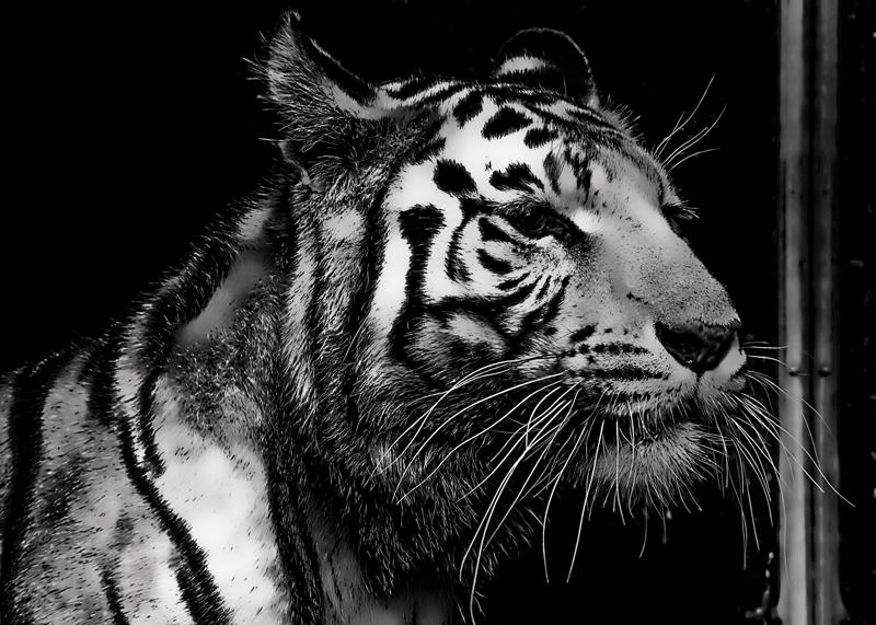 Demande pour faire parti du Clan du Tigre  Photo-10