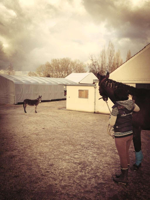 FREDO - âne né en 1995 - adopté en novembre 2012 par Virginie - Page 3 Photo110