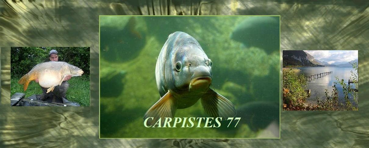 Carpiste77