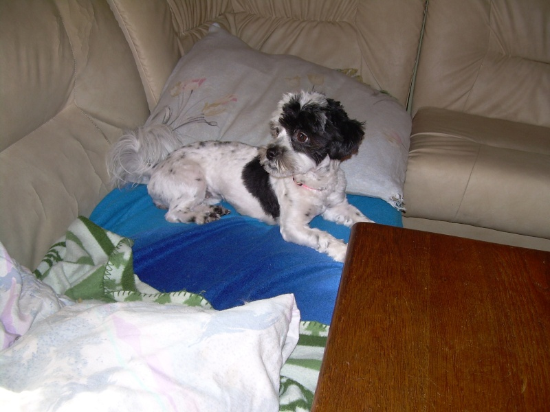 Lola, ma chienne 03510