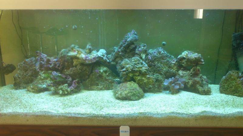 amenagement en coraux Dsc_0110