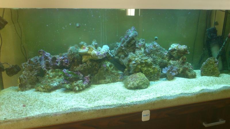 amenagement en coraux Dsc_0210