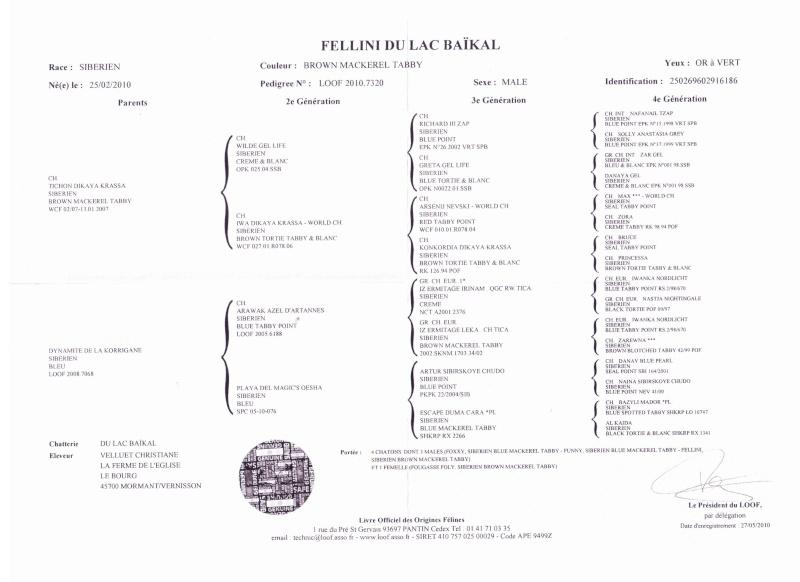 male pour saillie Pedigr12