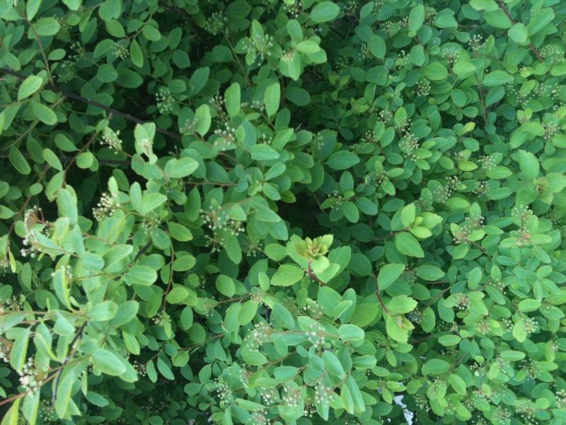 plantes du jardin Img_1324
