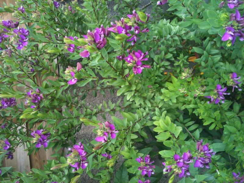plantes du jardin Img_1327