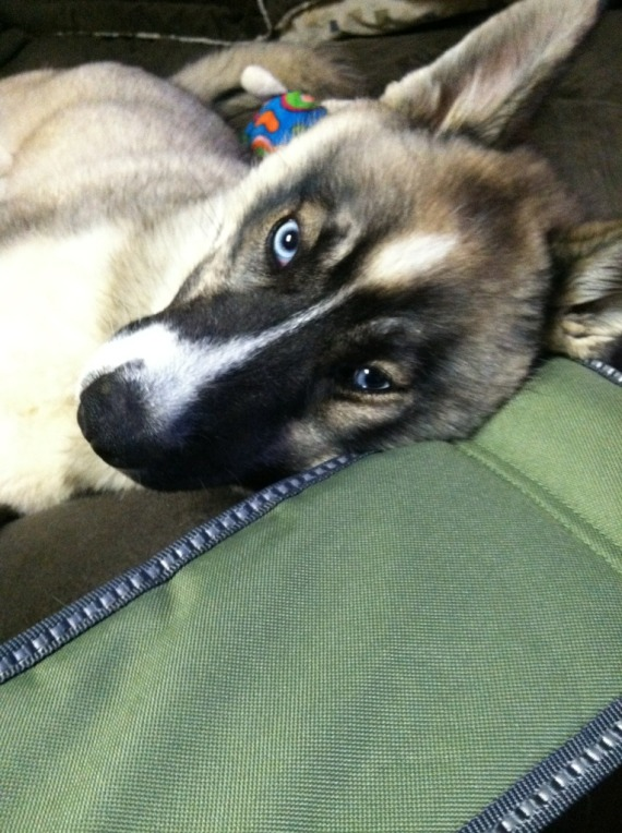 Koda and Nyx! Scrapbook! Updated 9/18/14 71429110
