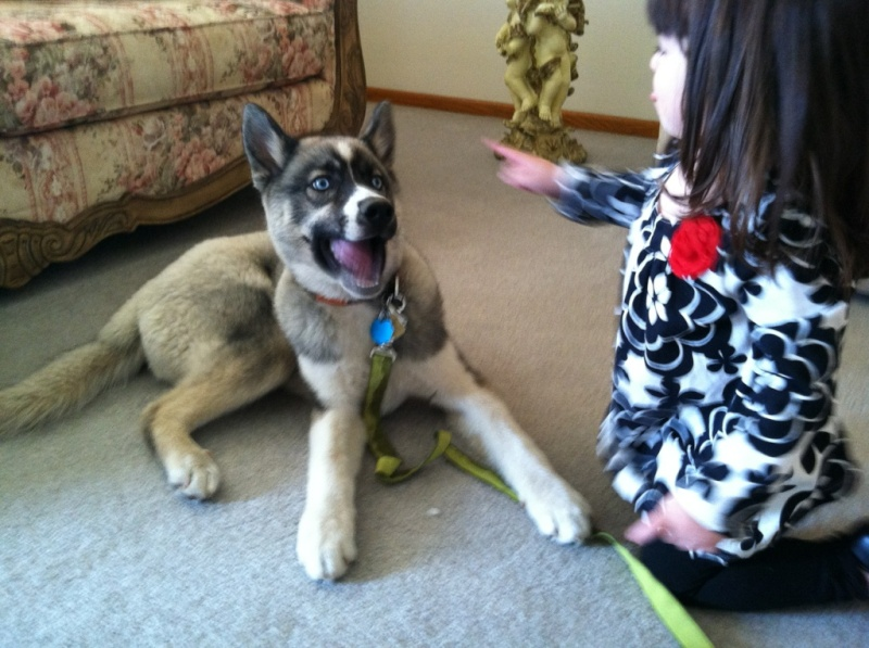 Koda and Nyx! Scrapbook! Updated 9/18/14 - Page 2 Fb038010