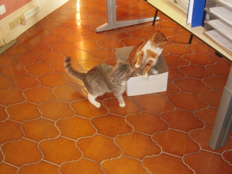 voici Alba et Ginger - Page 2 Dscn3117