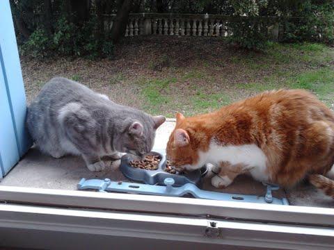 Ginger a un copain Repas_10