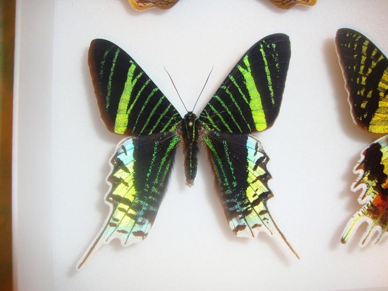Bourse aux insectes de Juvisy 2013 Jpg_9213