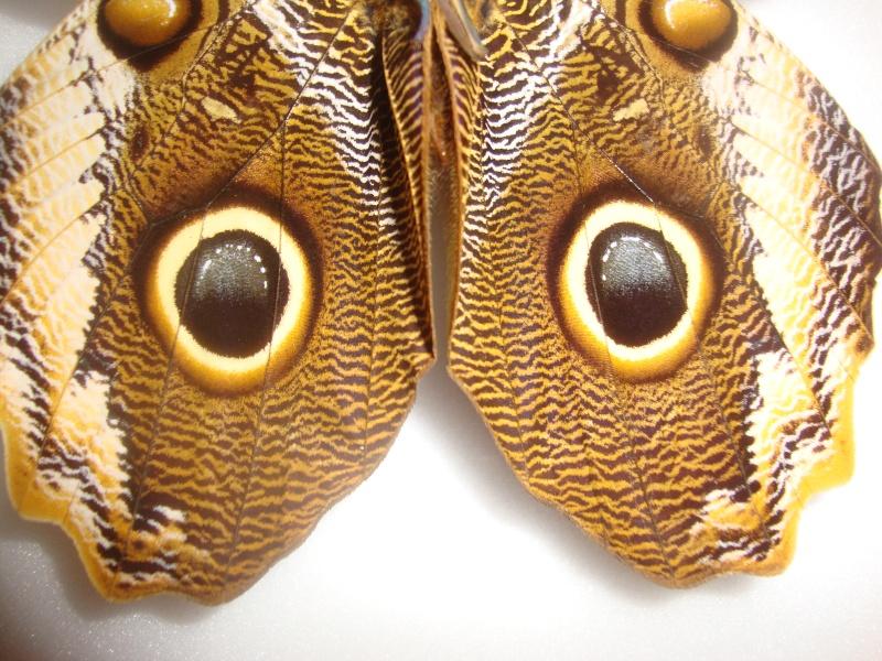 Bourse aux insectes de Juvisy 2013 Jpg_9312