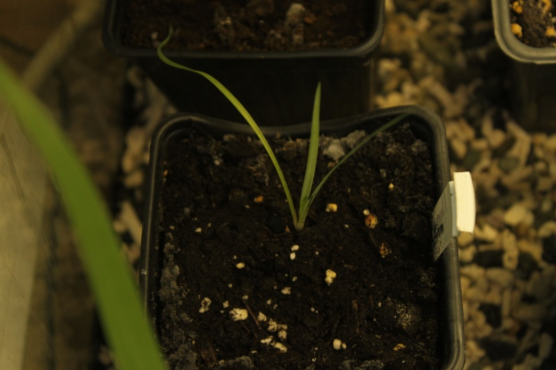 Quelques semis réussi ;) Img_3818