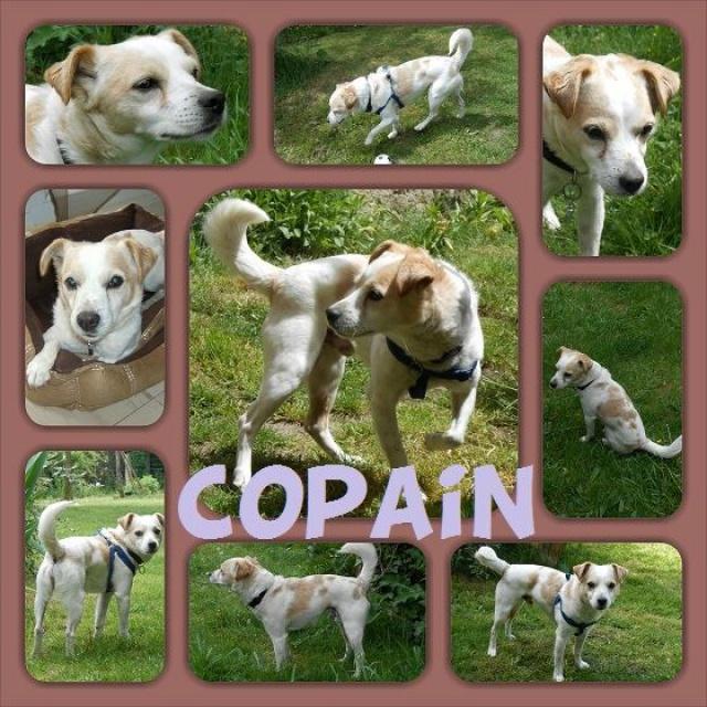 COPAIN Petit terrier de 6kg500. Copain10