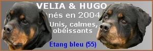 SOS POUR HUGO ET VELIA EN REFUGE DEPUIS 6 ANS Velia_11