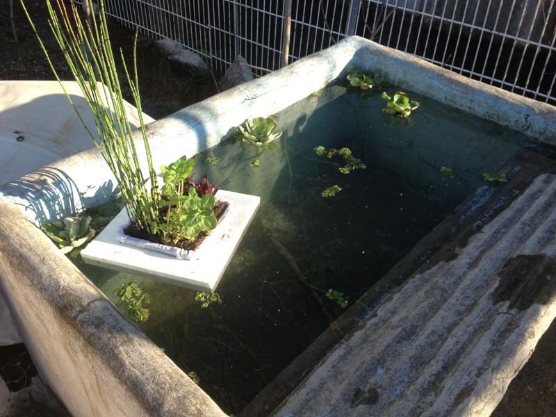 jardiniere aquatique Img_0521