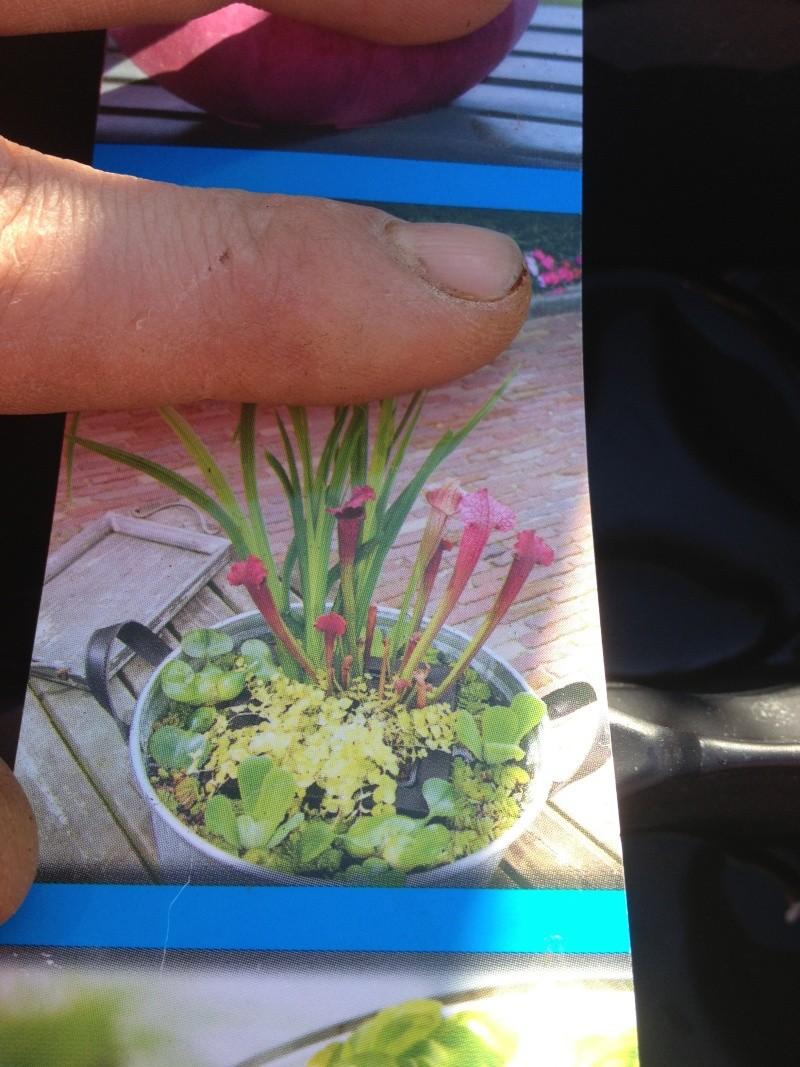 jardiniere aquatique Img_0523