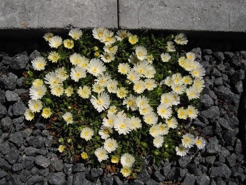Sascha`s Blüten von 2013 111